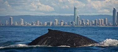 gold coast whale watching deal
