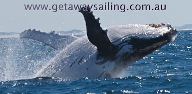 Gold Coast Whale Watching
