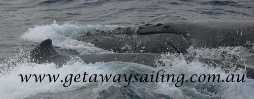 Getaway Sailing1.DAR_3015