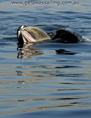 gold coast whale watching  tours