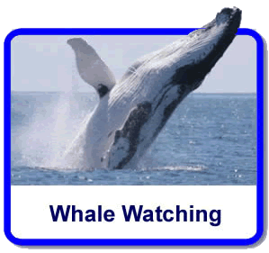 whale watching gold coast